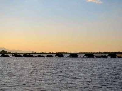 Liwonde Nationalpark Fluss Safari in Malawi Elefanten