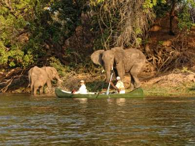 Zambezi Expeditions African Bush Camps Zimbabwe Luxus Camping Kanu Elefanten