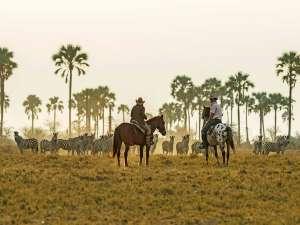 Botswana Safari Makgadikgadi Migration Pferde