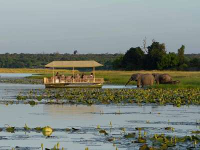 Chobe Game Lodge Boot Chobe Fluss Elefanten