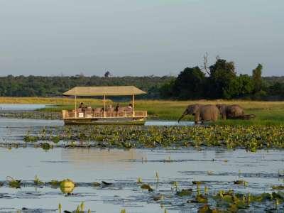 Chobe Game Lodge Boot Chobe Fluss Elefanten