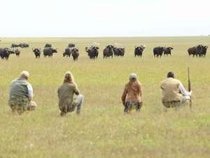 Kenia Walking Safari Fußsafari Büffel
