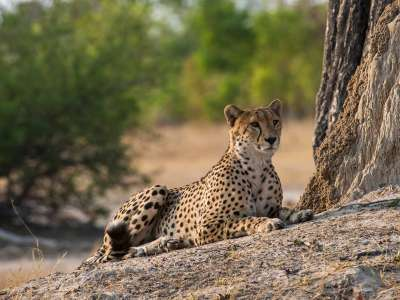 Simbabwe Linkwasha Camp Gepard Hwange Nationalpark