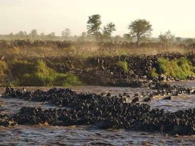 Tansania Luxusreise Serengeti Mara Fluss Gnuherde Sayari Camp