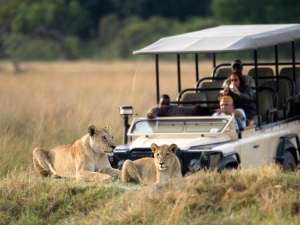 Vumbura Plains Camp Botswana Löwe Pirschfahrt Wilderness Safaris